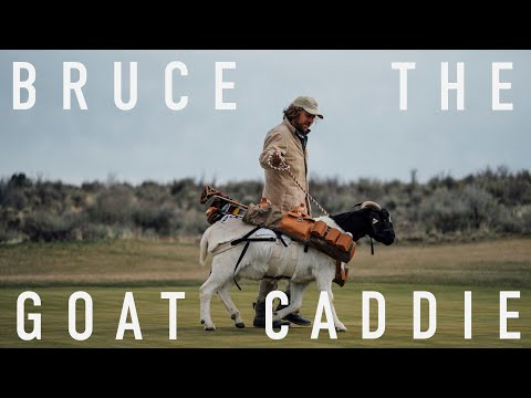 CAN A GOAT BE A GOLF CADDIE?